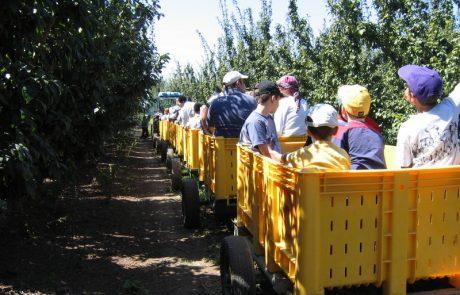 תפוח בדבש בגולן