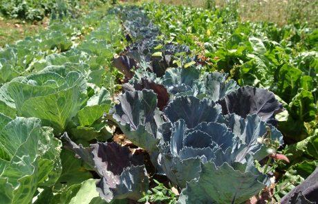 כך תקימו גינת ירק ביתית