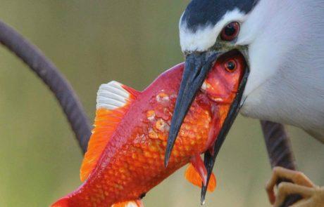 """""""כנפיים 2"""" – חובבי צילום במפגש עם הטבע"""