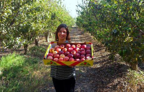 לקראת ראש השנה: זני התפוח העתידיים שיכבשו את השווקים