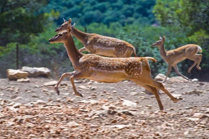 שמורת-טבע חי בר כרמל. צילום דורון ניסים