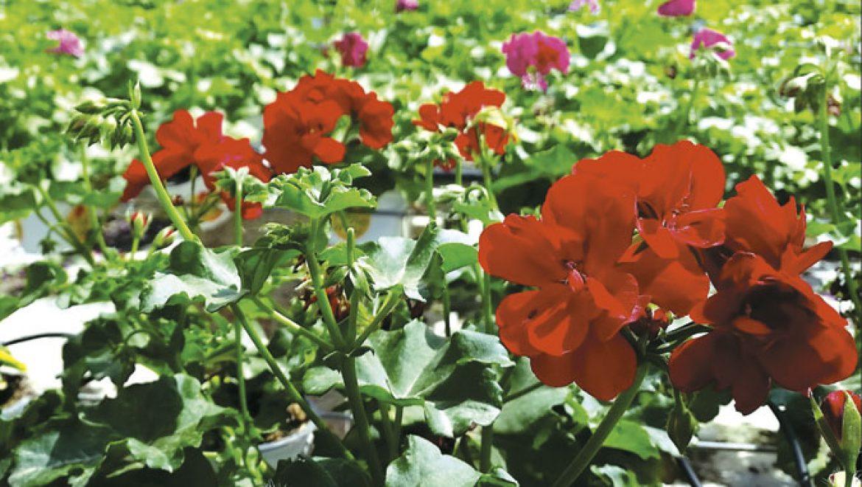 אביב הגיע – פסח בא: זה הזמן לגינה