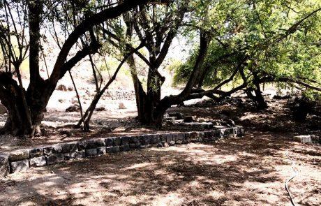 מעיין ביר א-שגום – השיקום