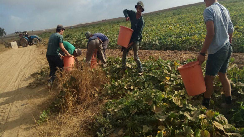 """תלמידי """"רגבים"""" לסייע לחקלאי עוטף עזה"""