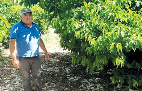 פחיתה ביבול פירות הקיץ