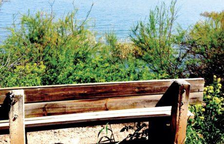 מסלול פריחה ותצפית על קורמורנים