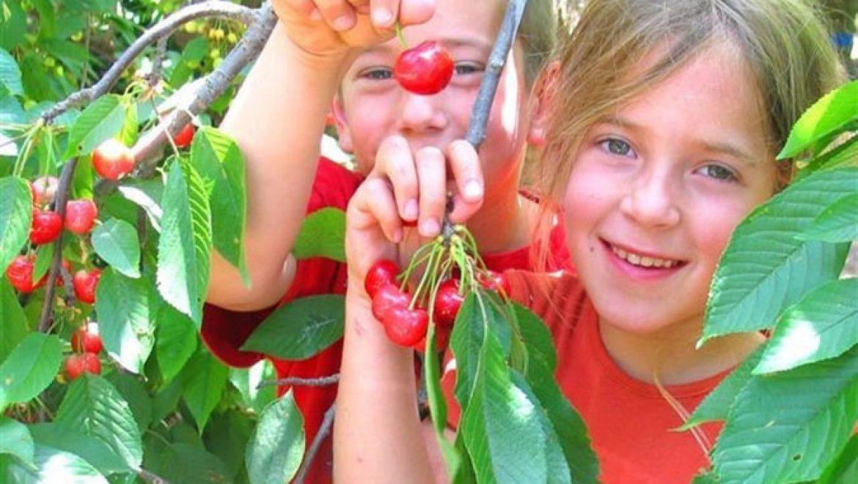 בשבוע הבא קטיף  תותי קיץ ופירות יער