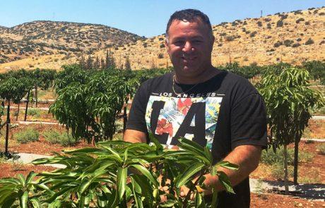 ישראל – מעצמת גידול מנגו