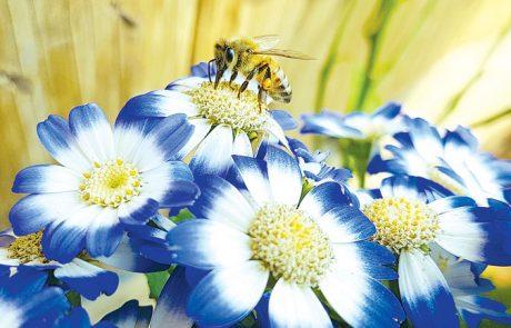 המסתורין של הפרח הכחול