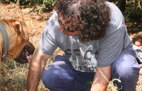 קטיף וסטודנטים בעין זיוון – סיפור אהבה