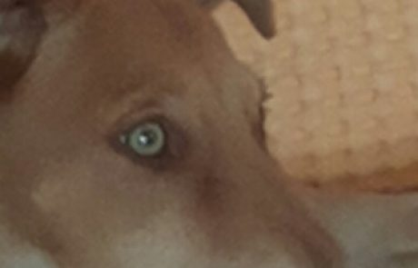 הושגה הסכמה כלביית קצרין לא תיסגר
