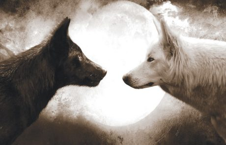 איזה זאב אתם מאכילים?