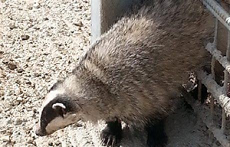 עוברי אורח מצילים חיות בר בגולן