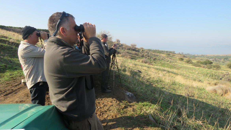 ספירת הצבאים השנתית בדרום הגולן