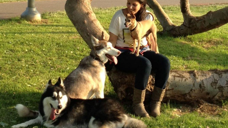 למען בעלי החיים בגולן – יום אימוץ ראשון בגולן
