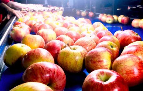 תפוחים ורימונים לראש השנה