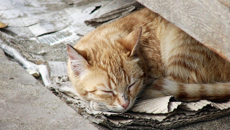 מבצע למניעת התרבות חתולי רחוב
